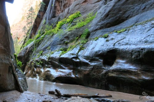 The Narrows, Zion Utah  Zion The narrows Rivier Canyon